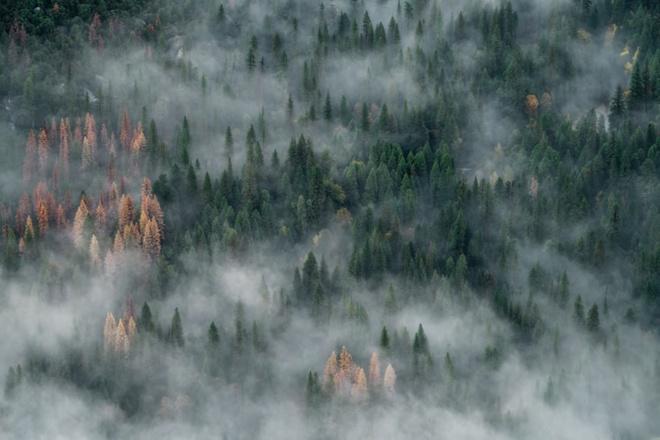 Feux de forêt, attention aux incendies !